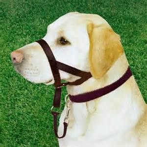 Halti Dog
