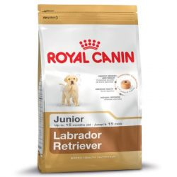 RC Labrador Junior