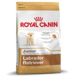 RC Labrador Junior