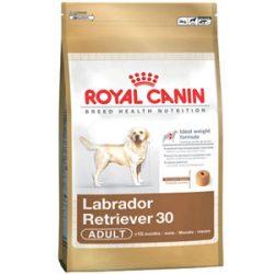 RC Labrador