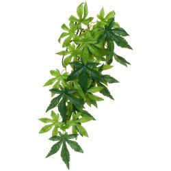 ET Silk Plant Abutilon